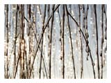 ice-covered-twigs-SM.jpg